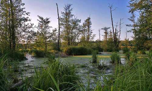 К чему снится болото: толкование сна про прогулки