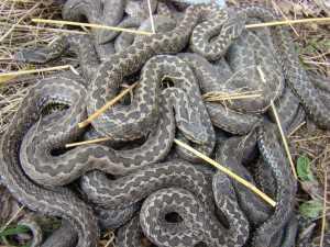 К чему снится укус змеи, укус гадюки или другой