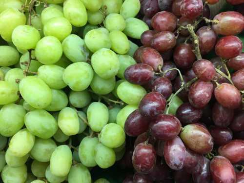 Особенности неукрывных сортов винограда в